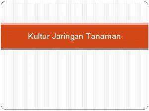 Kultur Jaringan Tanaman Kultur jaringanKultur In VitroTissue Culture