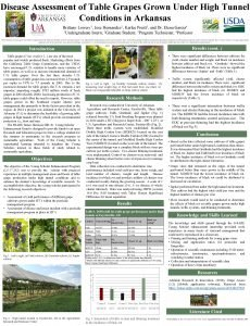 Disease Assessment of Table Grapes Grown Under High