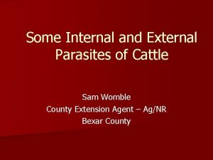 Some Internal and External Parasites of Cattle Sam