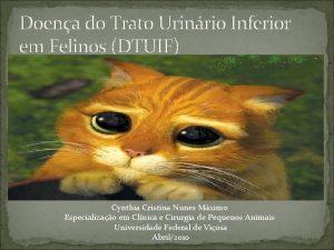 Doena do Trato Urinrio Inferior em Felinos DTUIF