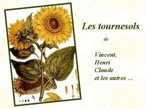 Les tournesols de Vincent Henri Claude et les