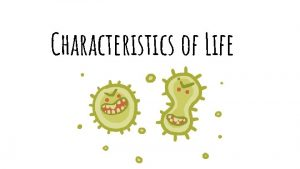 Characteristics of Life All living things must Respond