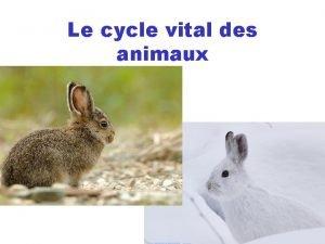 Le cycle vital des animaux Le cycle vital