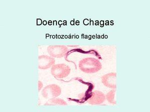 Doena de Chagas Protozorio flagelado Carlos Chagas mdico