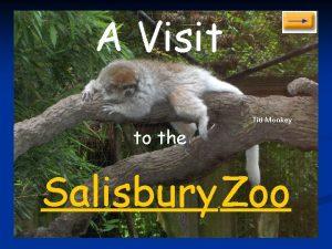A Visit to the Titi Monkey Salisbury Zoo