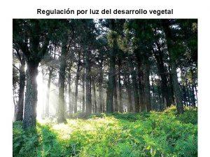 Regulacin por luz del desarrollo vegetal Variacin de