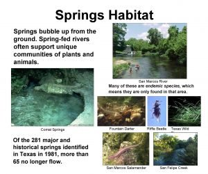 Springs Habitat Springs bubble up from the ground