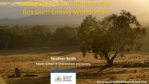 Ecosystem accounting for the Box Gum Grassy Woodlands