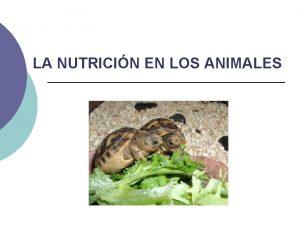 LA NUTRICIN EN LOS ANIMALES Todos los animales