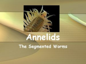 Annelids The Segmented Worms Characteristics Includes duster worms
