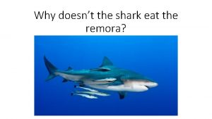 Why doesnt the shark eat the remora Symbiosis