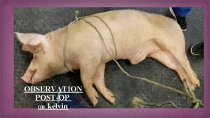 OBSERVATION POSTOP on kelvin Kelvin immediately after surgery
