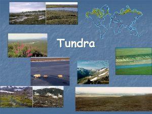 Tundra Co je to tundra n n Tundra