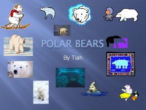 POLAR BEARS By Tiah ABOUT POLAR BEARS BABIES