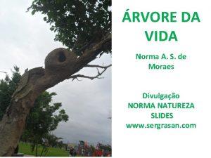 RVORE DA VIDA Norma A S de Moraes