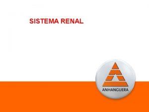 SISTEMA RENAL Sistema Renal Rins Secretam a urina