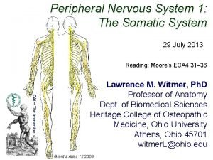 Peripheral Nervous System 1 The Somatic System 29