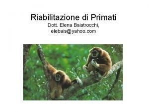 Riabilitazione di Primati Dott Elena Baistrocchi elebaisyahoo com