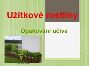 Uitkov rostliny Opakovn uiva Foto archiv autorky V