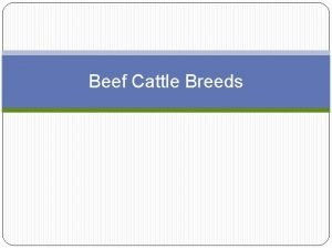 Beef Cattle Breeds BOS TAURUS Breeds of Beef