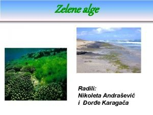 Zelene alge Radili Nikoleta Andraevi i ore Karagaa