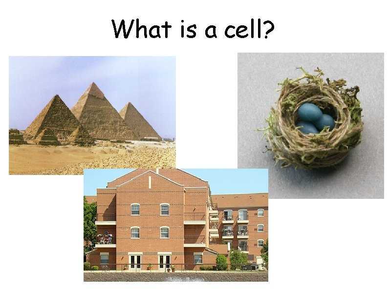 What is a cell Pyramids The Great Pyramids