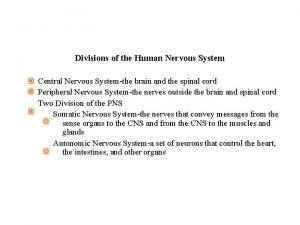 Divisions of the Human Nervous System Central Nervous