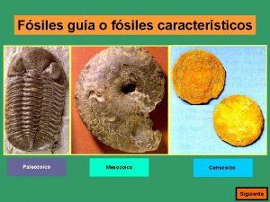 Fsiles gua o fsiles caractersticos Paleozoico Mesozoico Cenozoico