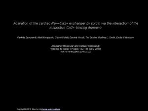Activation of the cardiac NaCa 2 exchanger by