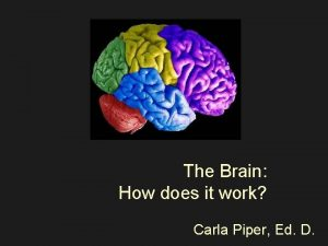 The Brain How does it work Carla Piper