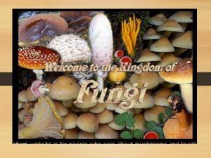 FUNGI FUNGI COMMON FUNGI EXAMPLES Mushrooms yeasts molds