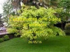 Ladattamento delle piante allambiente Luca Ferrari 1 B