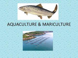 AQUACULTURE MARICULTURE AQUACULTURE The broad term aquaculture refers