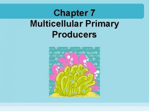 Chapter 7 Multicellular Primary Producers Primary producers those