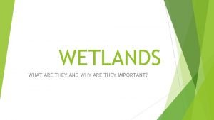 WETLANDS WHAT ARE THEY AND WHY ARE THEY