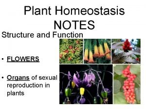 Plant Homeostasis NOTES Structure and Function FLOWERS Organs