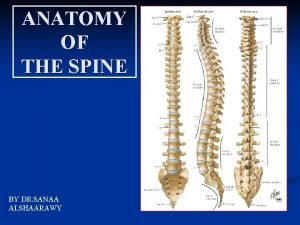 ANATOMY OF THE SPINE BY DR SANAA ALSHAARAWY