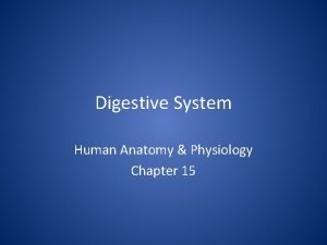 Digestive System Human Anatomy Physiology Chapter 15 Digestive