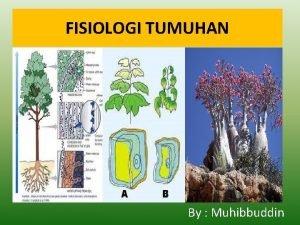 FISIOLOGI TUMUHAN By Muhibbuddin FISIOLOGI TUMBUHAN Fisiologi Physis