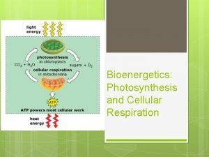 Bioenergetics Photosynthesis and Cellular Respiration PHOTOSYNTHESI S Capturing
