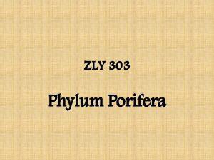 ZLY 303 Phylum Porifera Phylum Porifera Sponges 5000