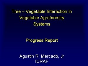 Tree Vegetable Interaction in Vegetable Agroforestry Systems Progress