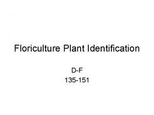 Floriculture Plant Identification DF 135 151 135 Dianthus