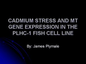 CADMIUM STRESS AND MT GENE EXPRESSION IN THE