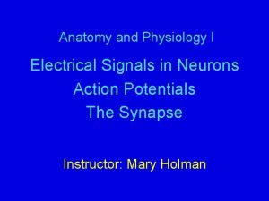 Anatomy and Physiology I Electrical Signals in Neurons