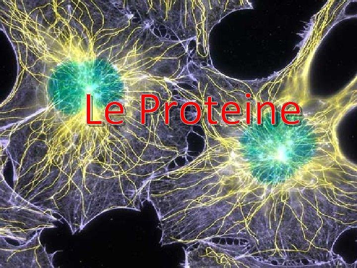 Le Proteine Le Proteine Sono sostanze indispensabili alla