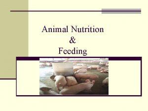 Animal Nutrition Feeding Nutrition n The process by