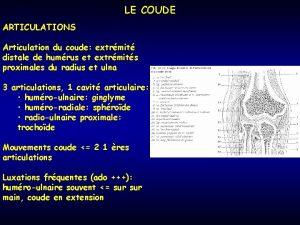 LE COUDE ARTICULATIONS Articulation du coude extrmit distale