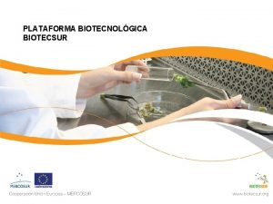 PLATAFORMA BIOTECNOLGICA BIOTECSUR Plataforma BIOTECSUR Antecedente de la