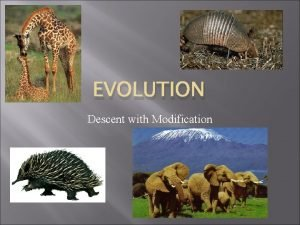 EVOLUTION Descent with Modification Evolution A basic definition